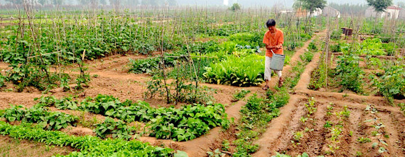 small-scale-intensive-agriculture