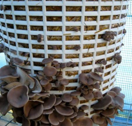 Mushroom Substrates Preparation - The Educators