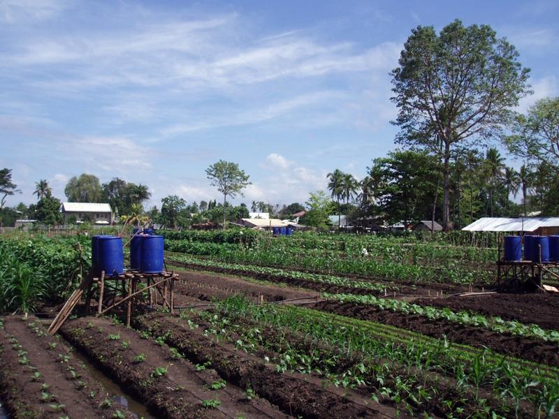 Intensive Farming - The Educators