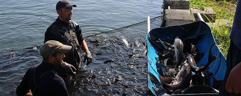 The Return on Investment in The Fishery Business? - The